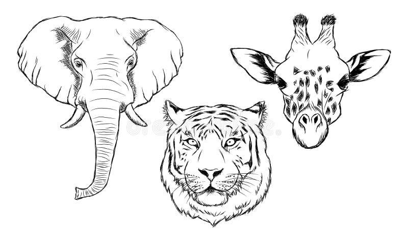 Set of black and white hand drawn wild animals stock illustration