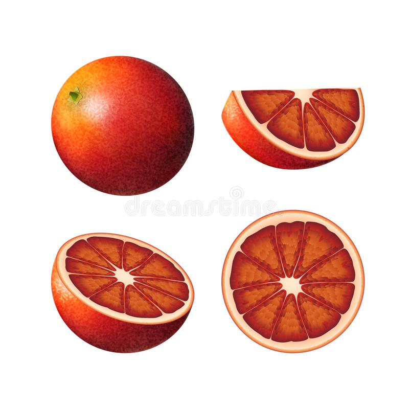 Set of bloody orange. Isolated half of red colorful orange, whole round fruit, half, and juicy slice on white background. Realistic colored juicy red orange vector illustration