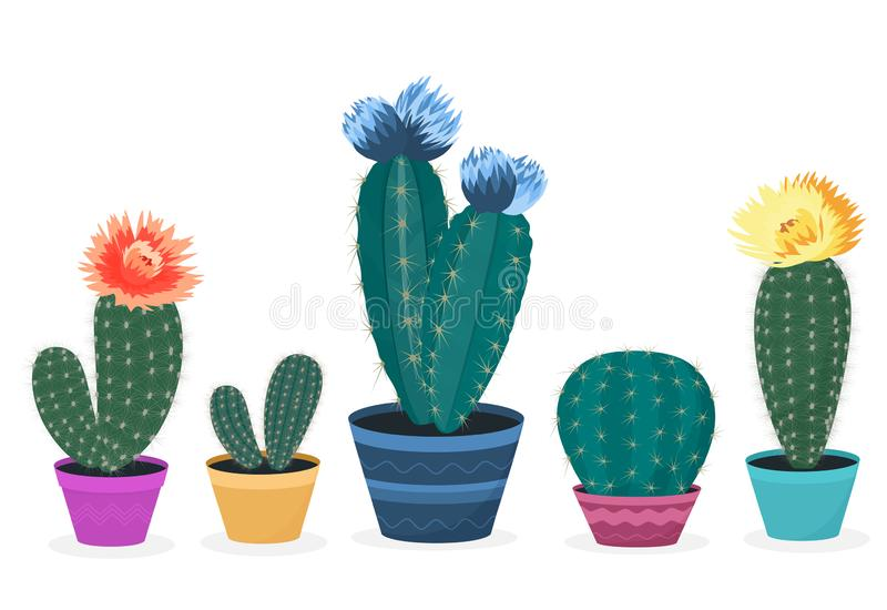 Set of blooming cacti. Cactus in a pot. Potted home plant royalty free illustration