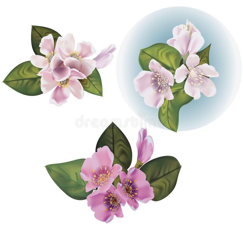 Set of Blossom apple flowers stock photography