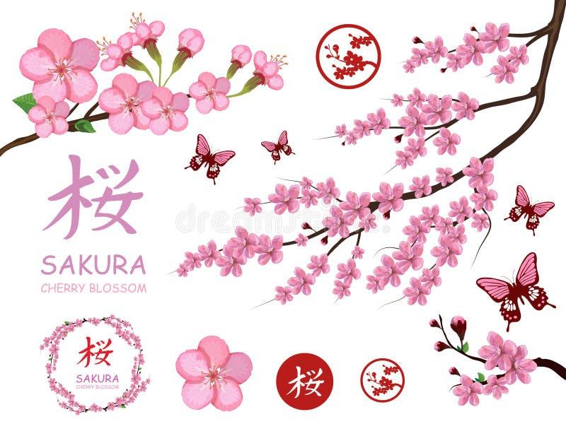 Set with blossom sakura flowers. Cherry flower blossom. Pink sakura flower blossom isolated on white background. Spring cherry royalty free illustration