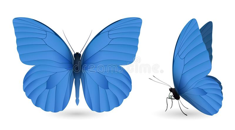 Download Set Of Butterflies Isolated On White Background Stock Vector - Illustration of moth, exotic: 108959626