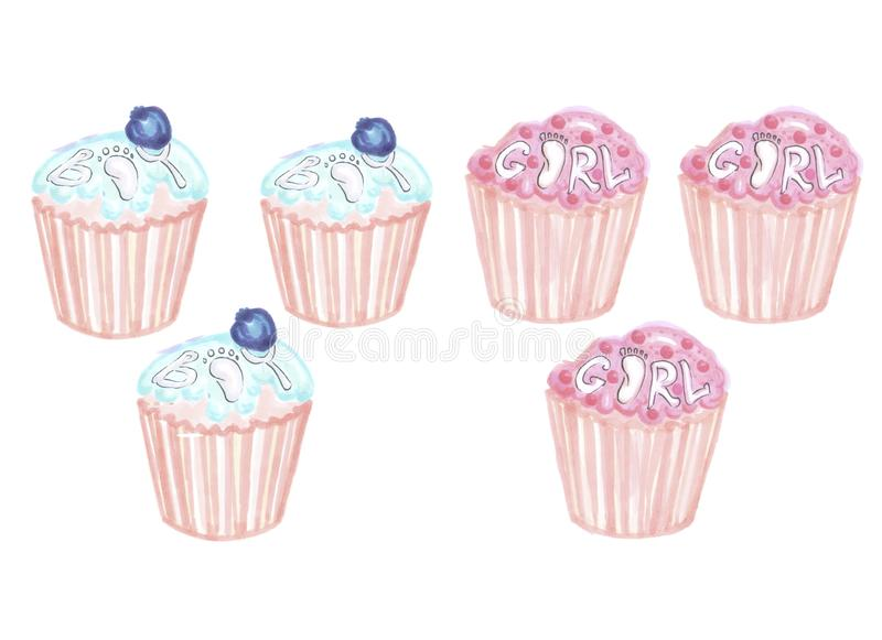 Set of blue and pink cupcakes for a gender reveal party. On a white background royalty free illustration