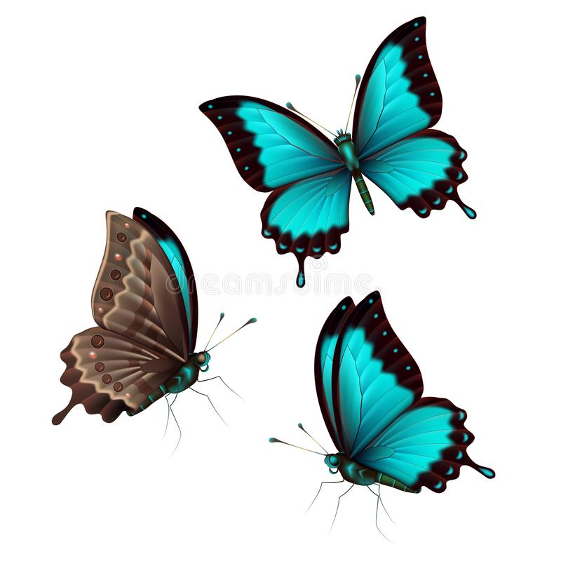Set blue tropical butterflys on a white background, a flying insect. Vector stock illustration