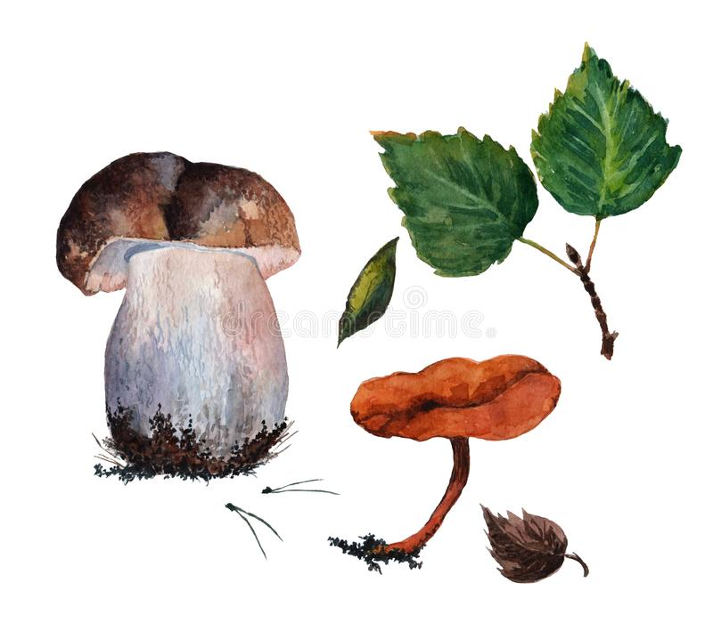 Set of Boletus mushroom, pine needles, Chanterelle mushroom, one brown leaf and three green leaves. Watercolor on white background royalty free illustration