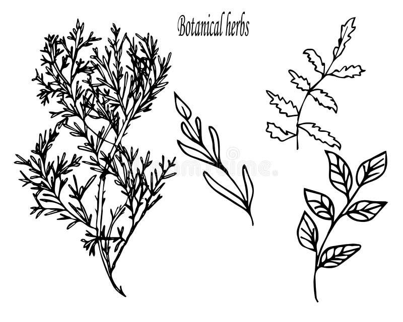 Set botaniczni kwiaty ręka patroszona ilustracja wektor