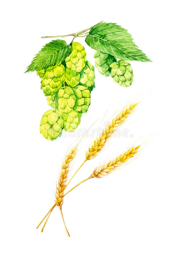Set of branches of green hops and spikelets of wheat. Watercolor illustration isolated on white background vector illustration