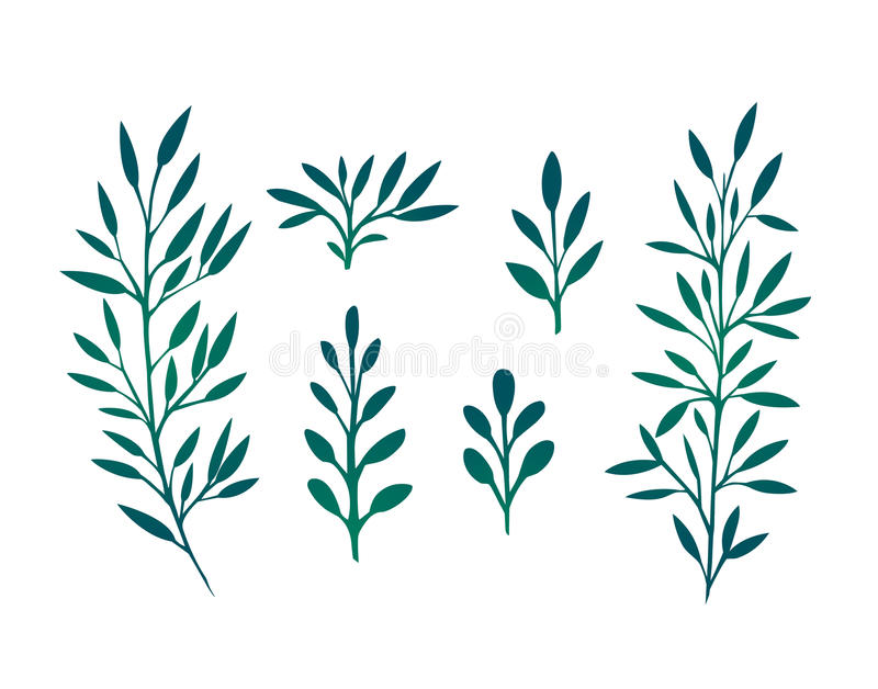Set of branches with leaves and herbs. For design and your creativity vector illustration