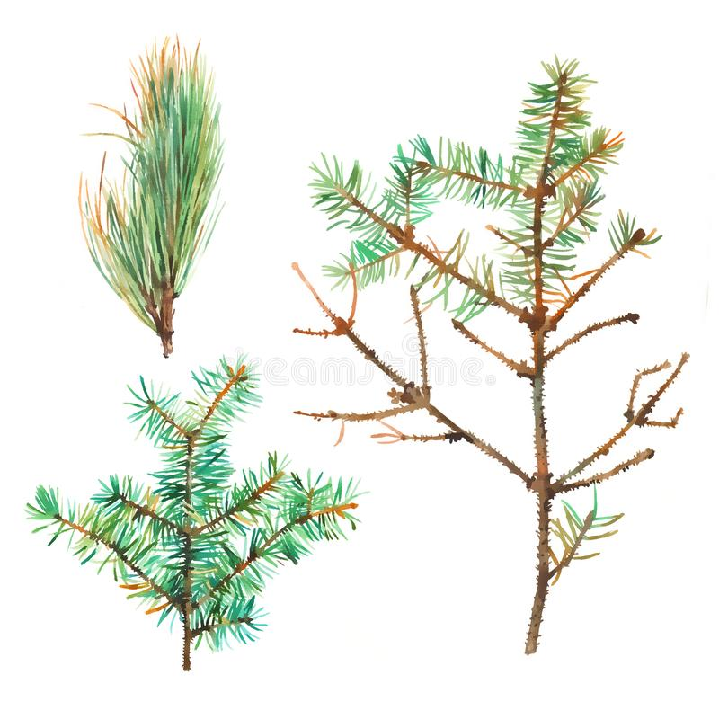Set of watercolor branches of pine and fir tree on white background royalty free stock photo