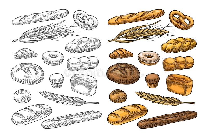 Set bread. Vector color vintage engraving. Set bread. Isolated on the white background. Vector color hand drawn vintage engraving illustration for poster, label stock illustration