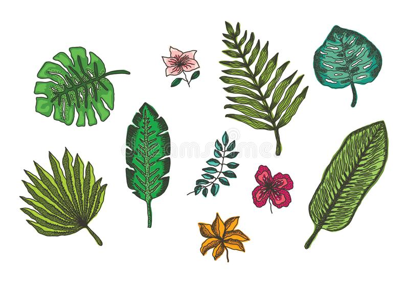 Set of bright colorful tropical leaves and flowers stock illustration