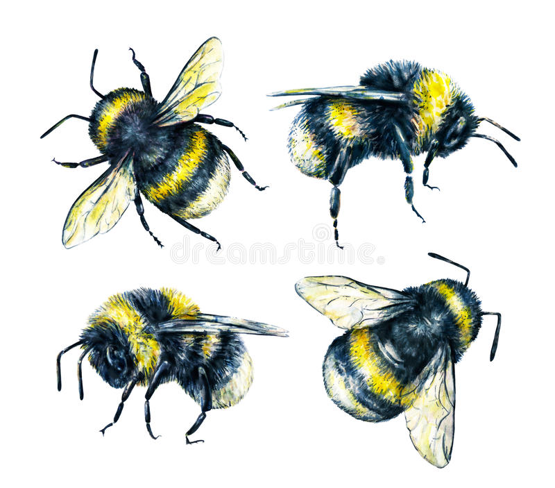 Set of bumblebees on a white background. Watercolor drawing. Insects art. Handwork royalty free illustration