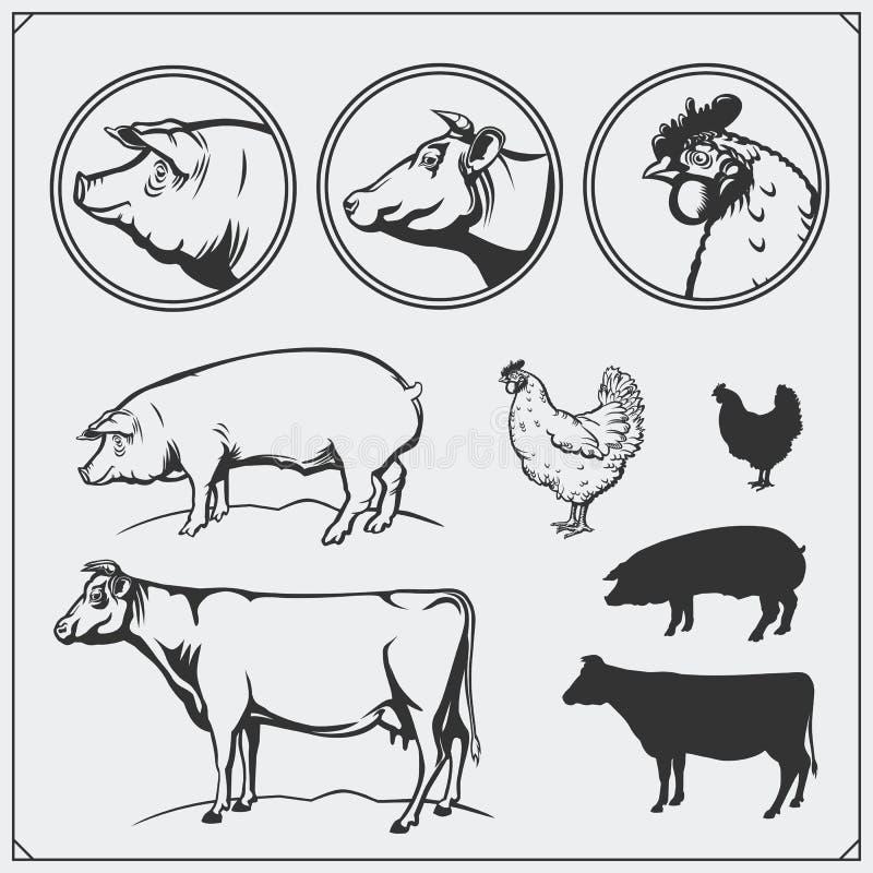 Set butchery emblematy i etykietki: kurczak, wieprzowina i wołowina, ilustracyjny lelui czerwieni stylu rocznik Ilustracja krowa, royalty ilustracja