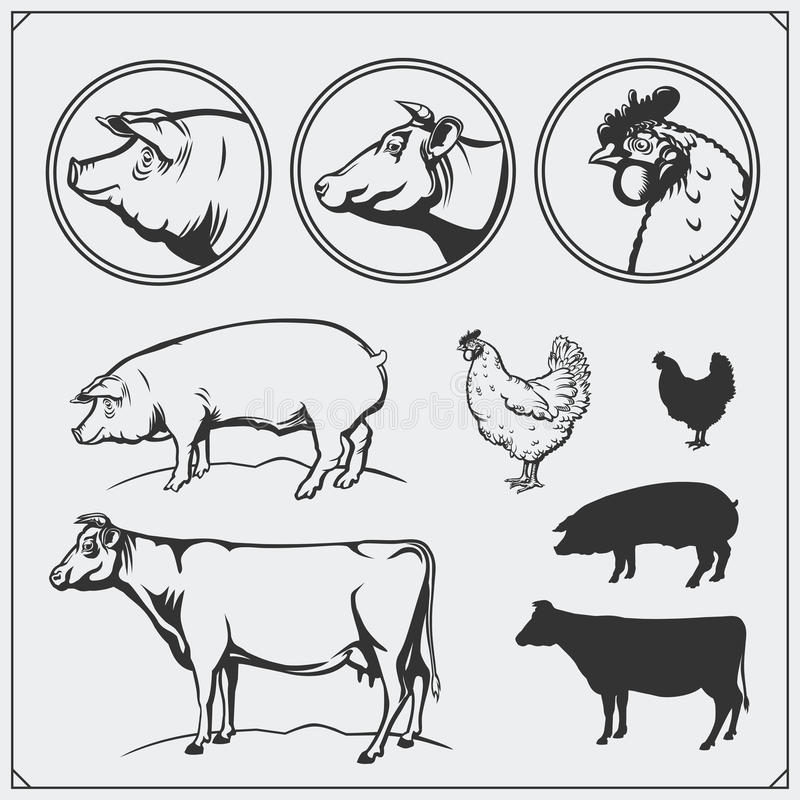 Set of butchery labels and emblems: chicken, pork and beef. Vintage style. Illustration of cow, hen and pig. Black and white royalty free illustration