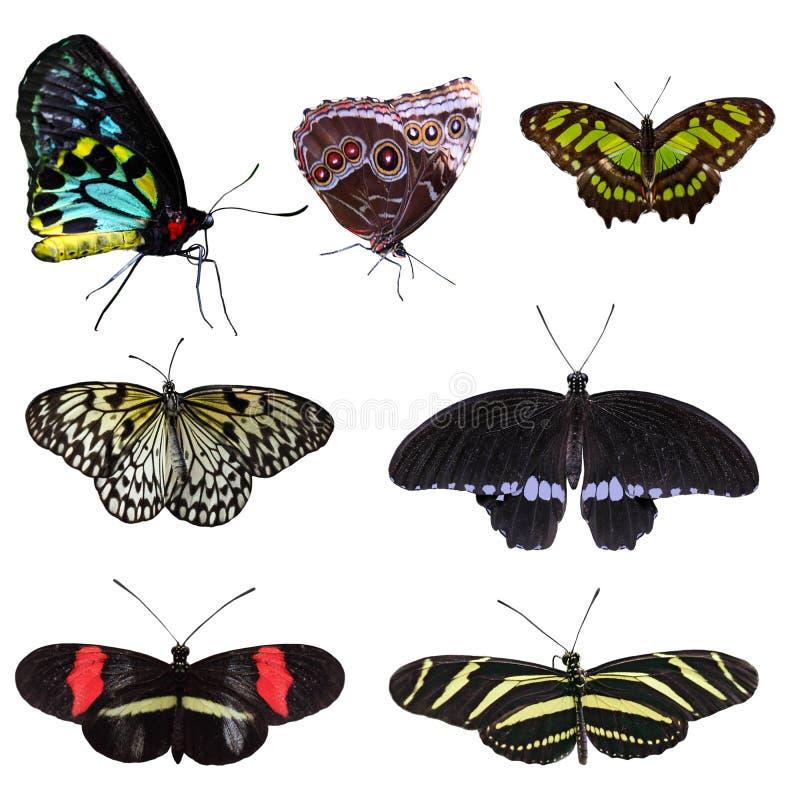 Set of Butterflies stock images