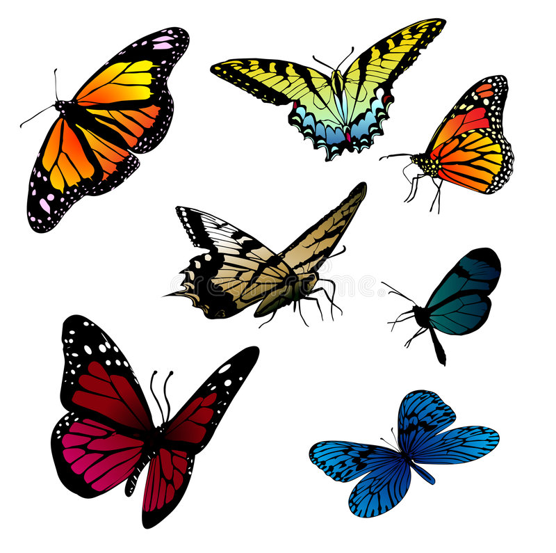 Set of butterflies. Collection of different vector butterflies stock illustration