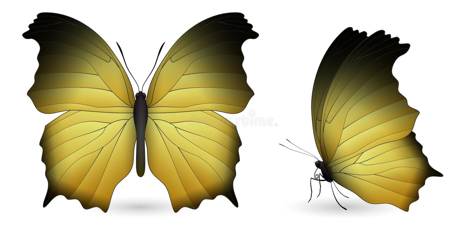 Download Set Of Butterflies Isolated On White Background Stock Vector - Illustration of large, insecta: 108959719
