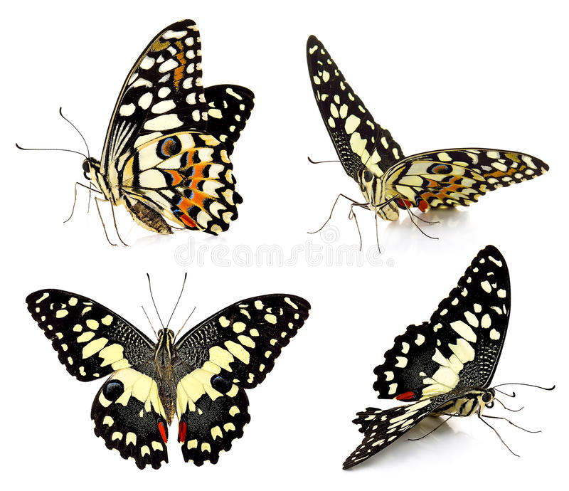 Set of butterfly isolated on white background royalty free stock photos