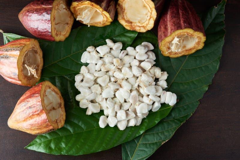 Set of cacao plant fruits stock image