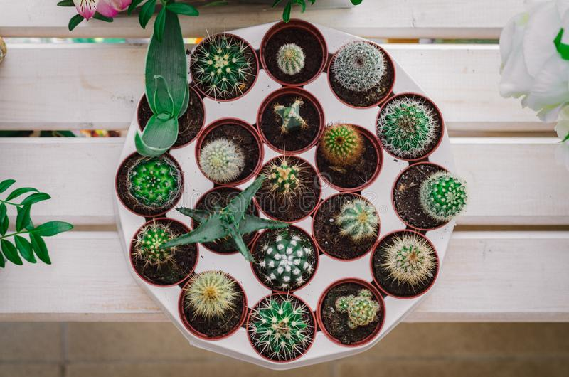 Set of cacti in pots in a flower shop royalty free stock photos