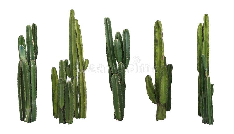 Set of cactus real plants isolated on white background royalty free stock photo