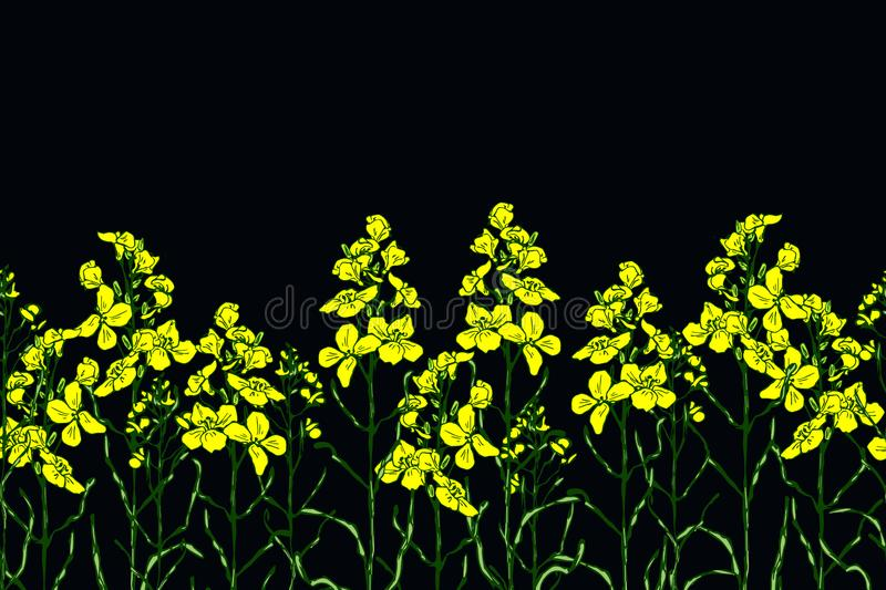 Set of canola flower and oil royalty free illustration