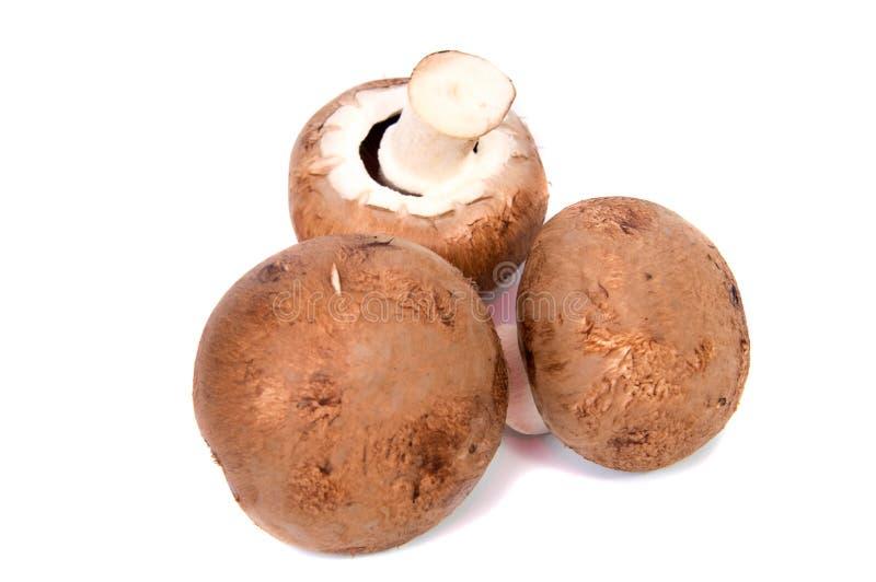 Set Champignon mushroom isolated on white. Background royalty free stock images