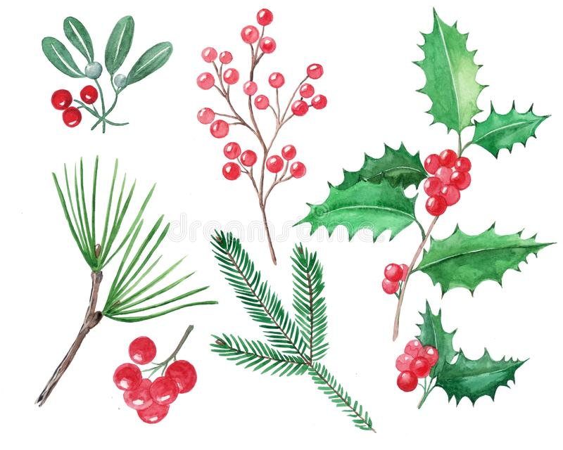Set of Christmas elements, red berries, holly, mistletoe, hand d. Rawn illustration, watercolor vector illustration