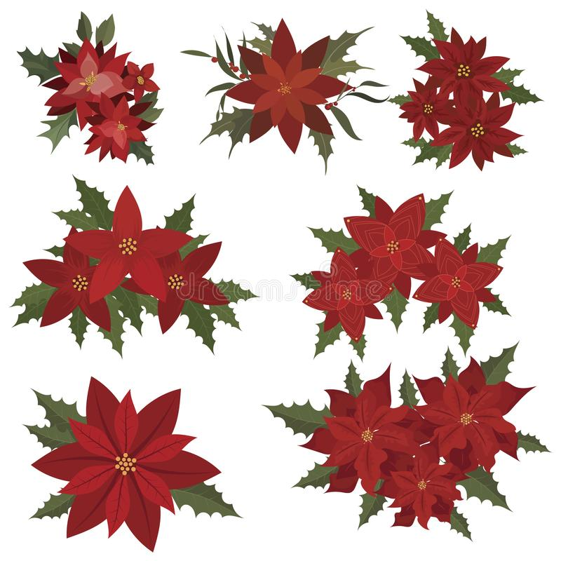Set of christmas flowers. Collection of poinsettia flowers. Cartoon illustration of poinsettia berries. Flat graphics. stock illustration