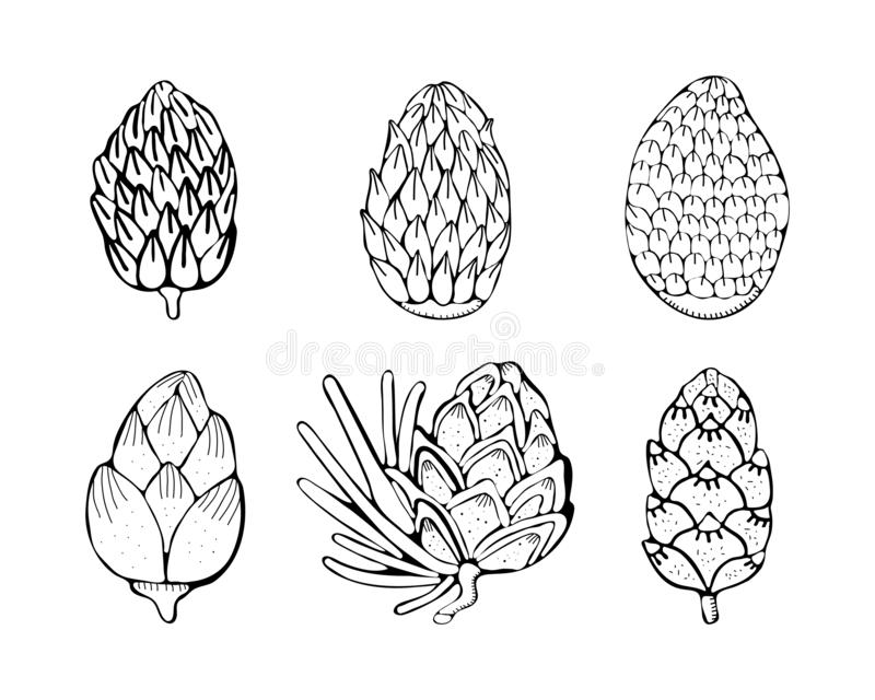 Set Christmas pine, fir tree branches and cones sketch. Hand drawn vector pencil drawing elements for Christmas and New Year royalty free illustration