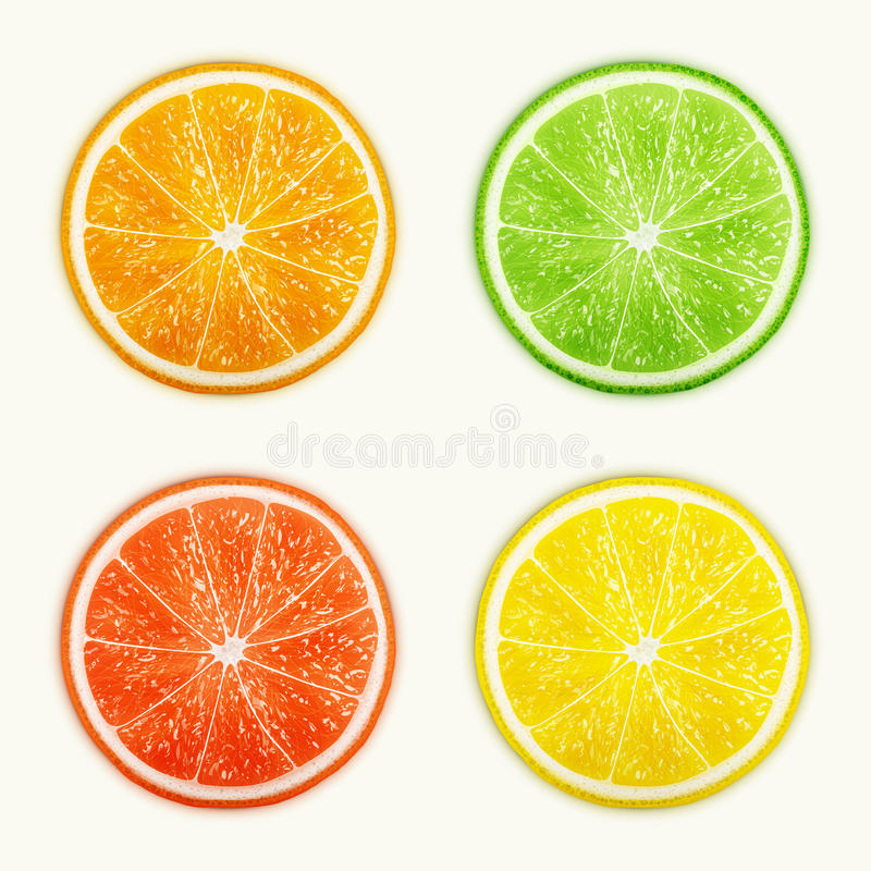 Set of citrus fruits. Orange, Lime, Grapefruit, Lemon. Eps10 vector illustration vector illustration