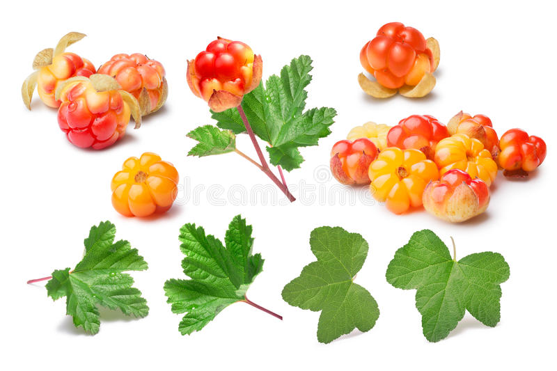 Set of cloudberries (Rubus Chamaemorus) and leaves, paths,elements. Set of cloudberries (Rubus Chamaemorus) and leaves. Design elements. Clipping paths, berries royalty free stock photos