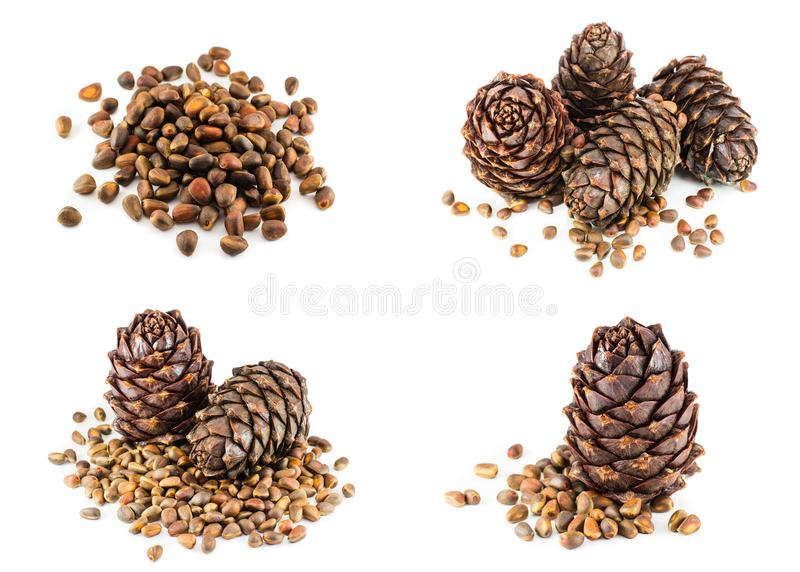Set, collage of ripe cedar cones and pine nuts stock photo