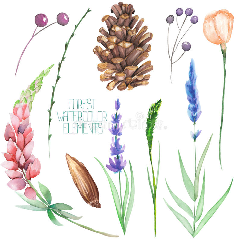Set, collection with the isolated watercolor forest elements (berries, cones, lavender, wildflowers and branches) royalty free illustration