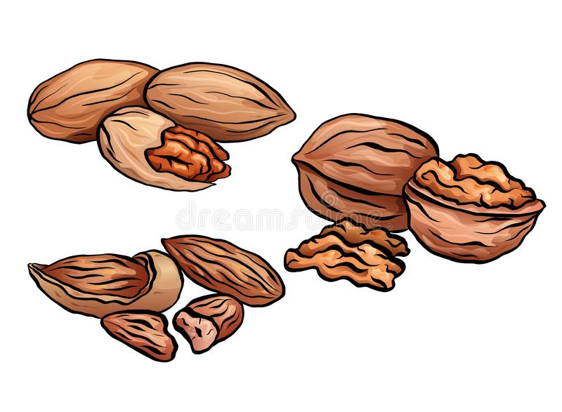 Set of colored cartoon nuts. Kit of walnut, pecan and almond. Objects separate from the background stock illustration