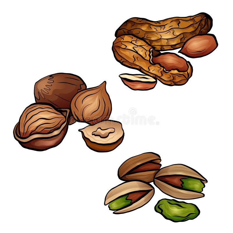 Set of colored cartoon nuts. Peanuts, hazelnut, pistachios. Objects separate from the background stock illustration