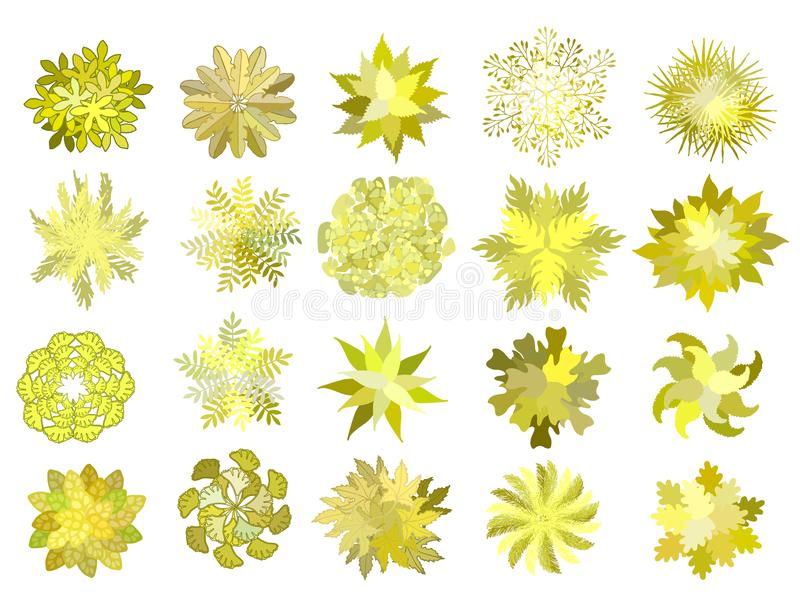 Set of colored hand drawn stylized top view autumn trees and plants. Graphic, isolated on white, vector. Set of colored hand drawn stylized top view autumn trees vector illustration