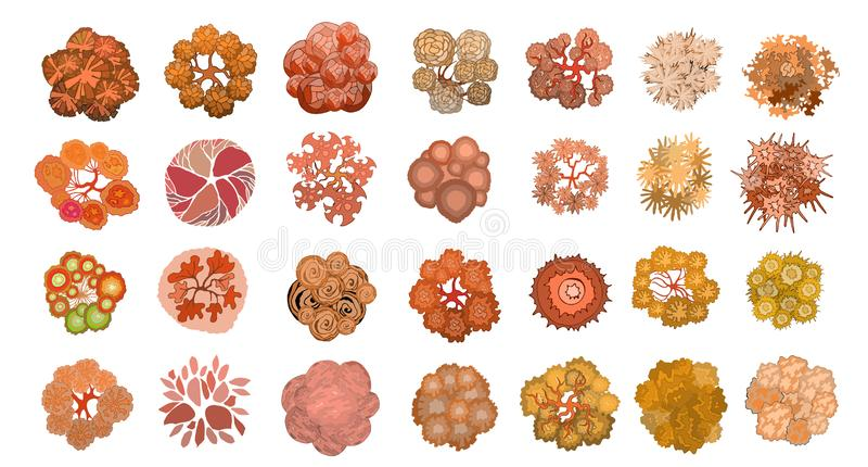 Set of colored hand drawn stylized top view autumn trees and plants. Graphic, isolated on white, vector. Set of colored hand drawn stylized top view autumn trees royalty free illustration