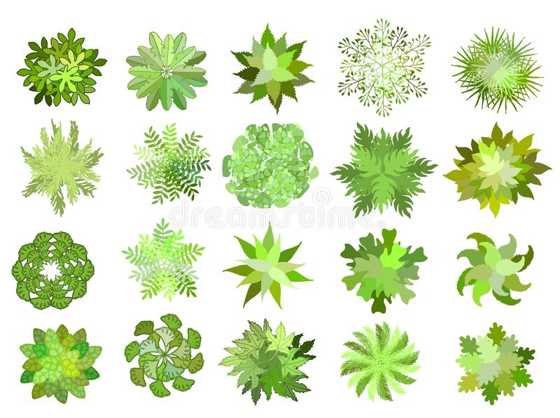 Set of colored hand drawn stylized top view trees and plants. Graphic, isolated on white, vector. Set of colored hand drawn stylized top view trees and plants vector illustration