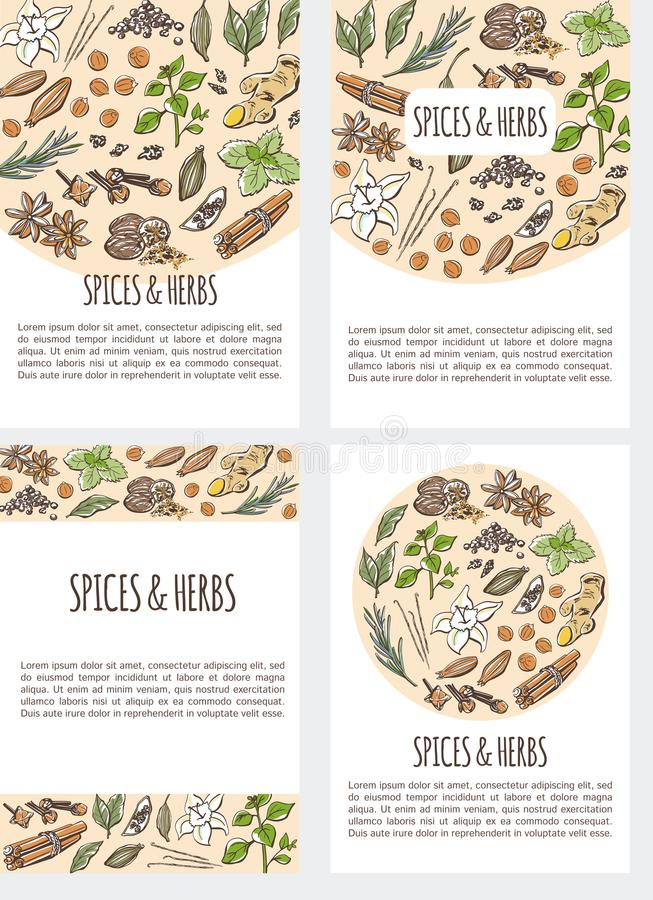 Set of colored vector card templates with spices and herbs vector illustration