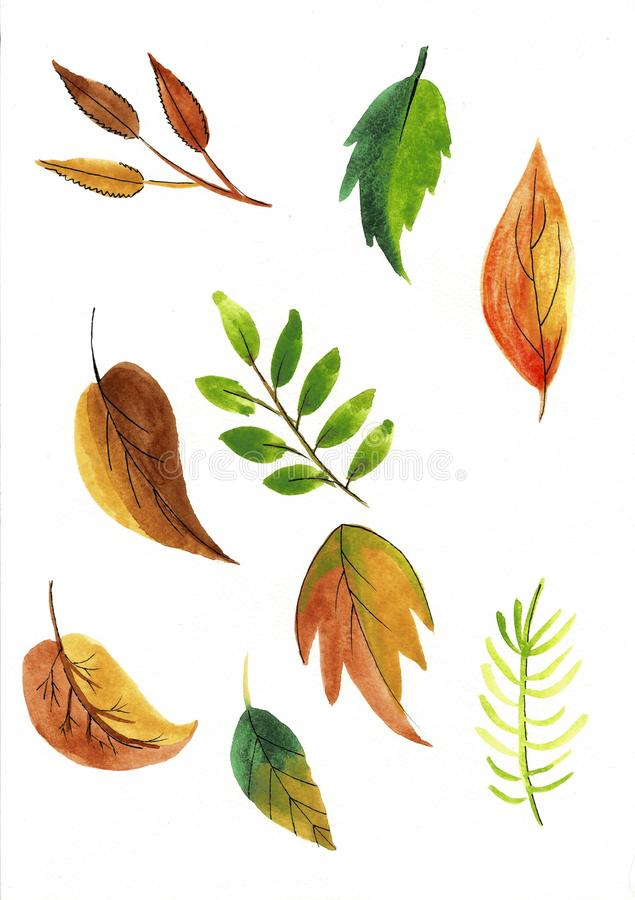 Set of colorful autumn leaves Watercolor illustration vector illustration