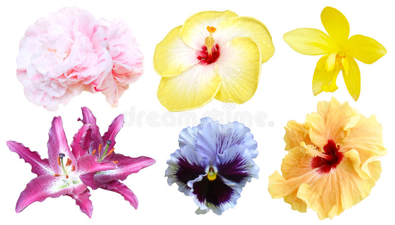 Set of colorful flower isolated, full bloom flora spring season royalty free stock photo
