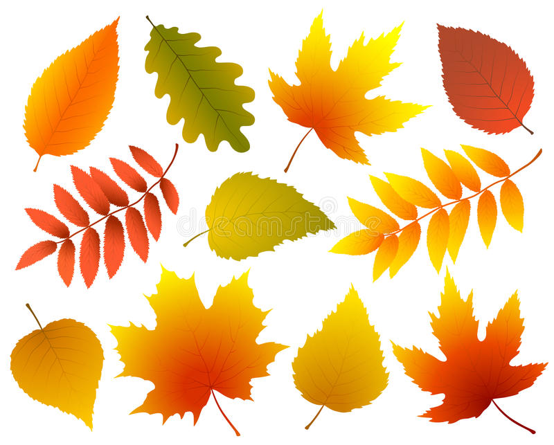 Set of colorful isolated autumn leaves stock illustration