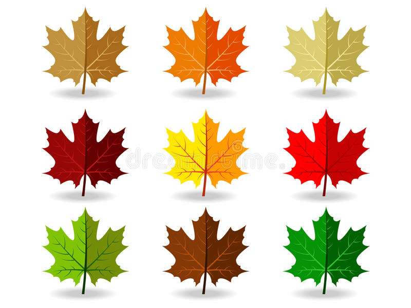 Set of colorful maple leaves royalty free illustration