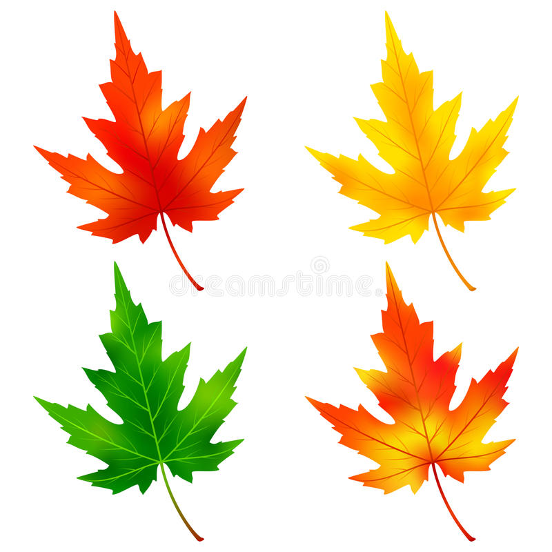 Set of colorful maple tree leaf vector illustration