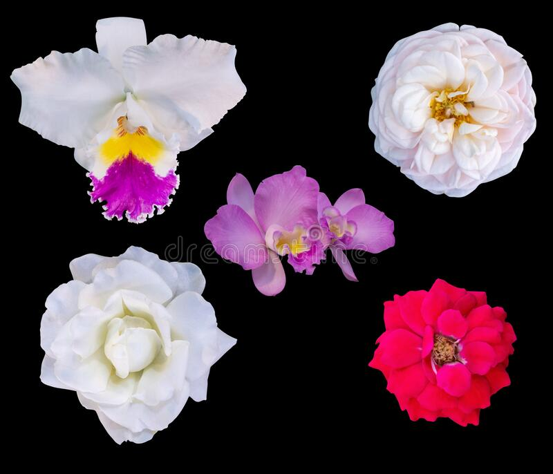 Set of colorful seasonal blooms. Set of natural flowers. isolated on a white background. Creative spring composition, Easter, stock image