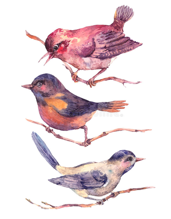 Set of colorful watercolors birds isolated on white royalty free illustration
