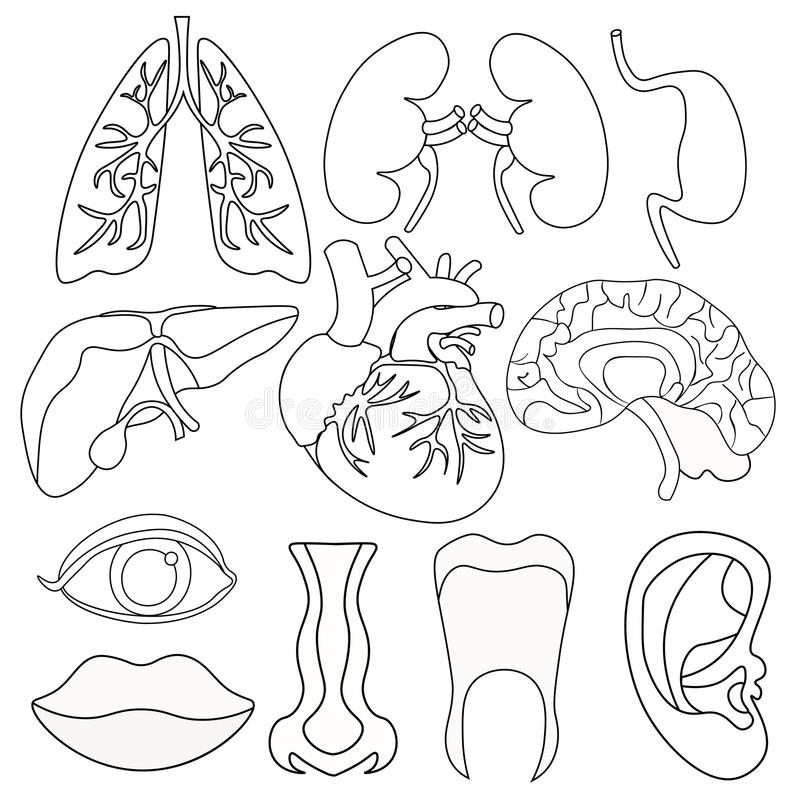 Set Of Coloring Human Organs Inside The Body And Face. Vector Il ...
