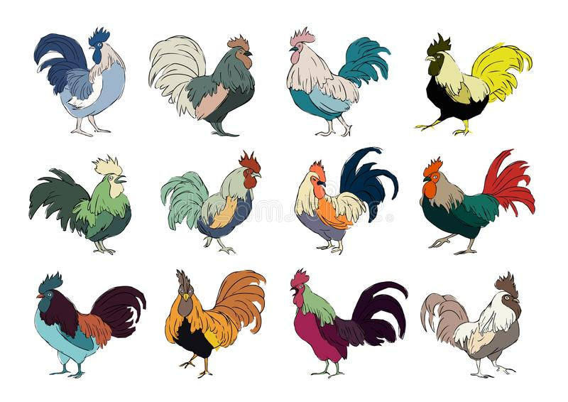 Set of colourful rooster on white stock illustration