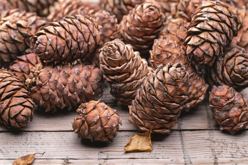 Harvest of mature cones of Siberian cedar pine. royalty free stock photo